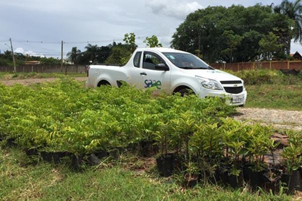 SAAE realiza plantio de seis mil mudas às margens do Córrego Lava Pés